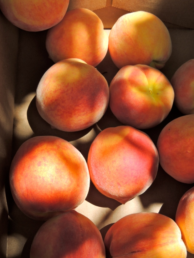 Peach Picking at Eckert's